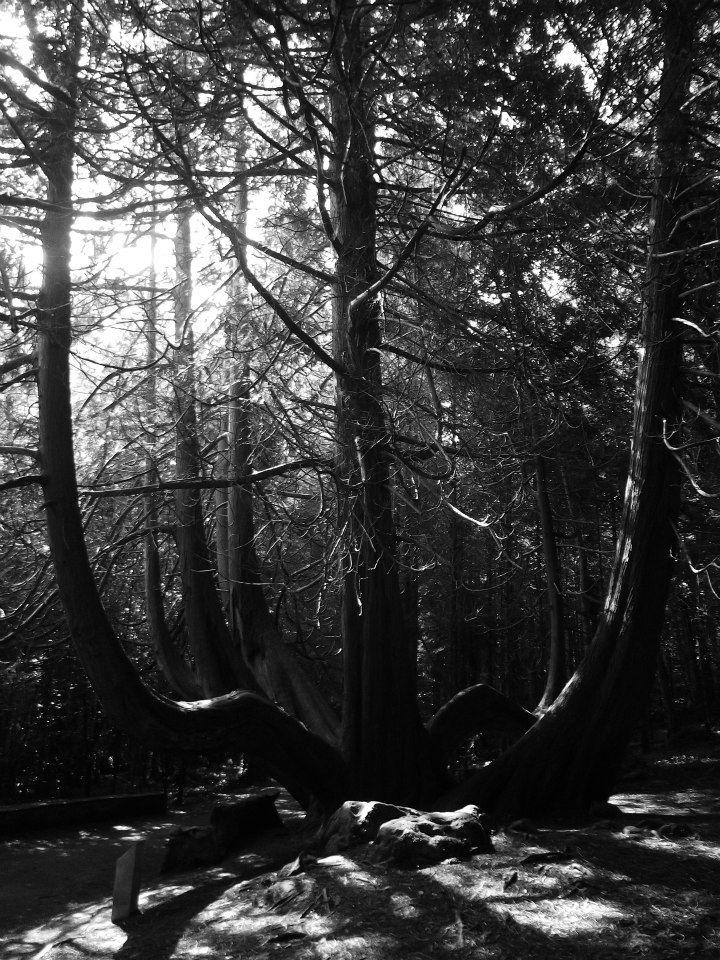 Bare Boned Tree - Photo By Emily O'Sullivan