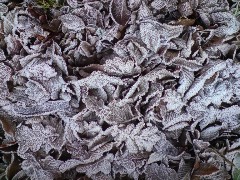 Veins of Frost on Veins of leaves - Photo by Eamonn Stewart