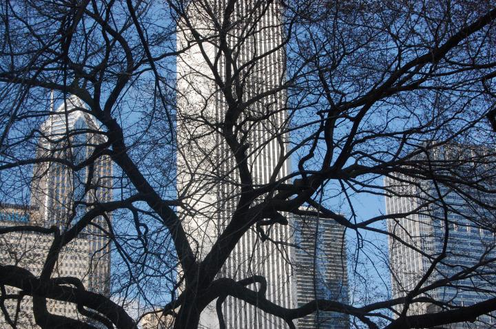 Tree scape