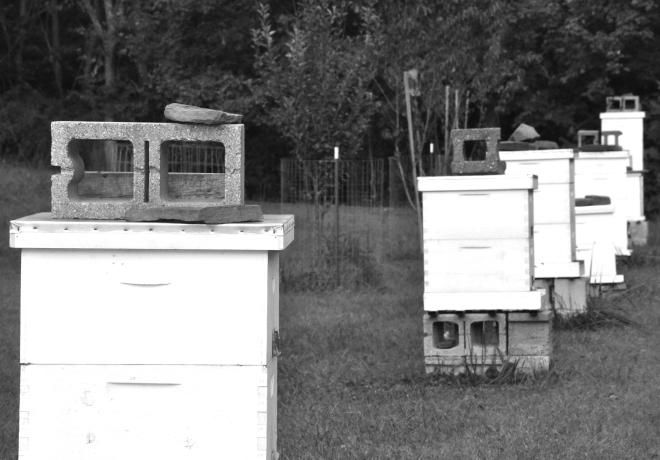 Ward_Hives